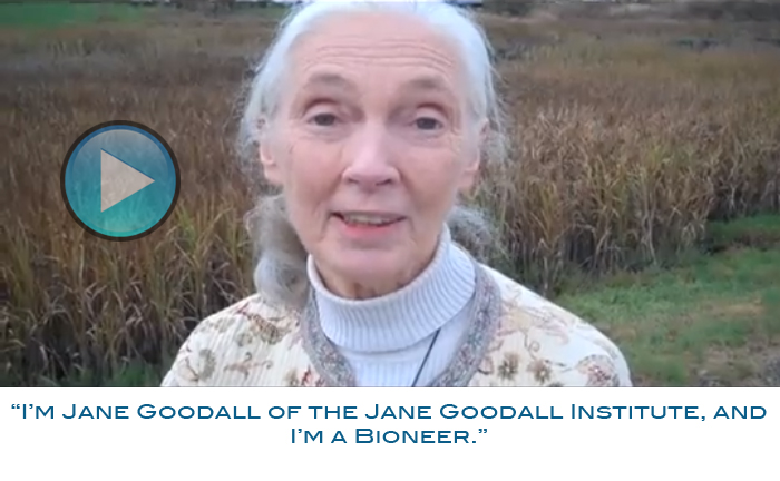 I am Bioneer | Are You?