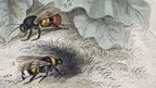 Illustration of two bees
