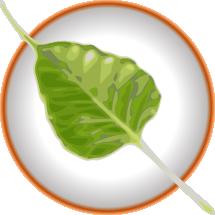 (bodhi logo)
