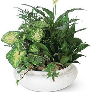 комнатные растения 60