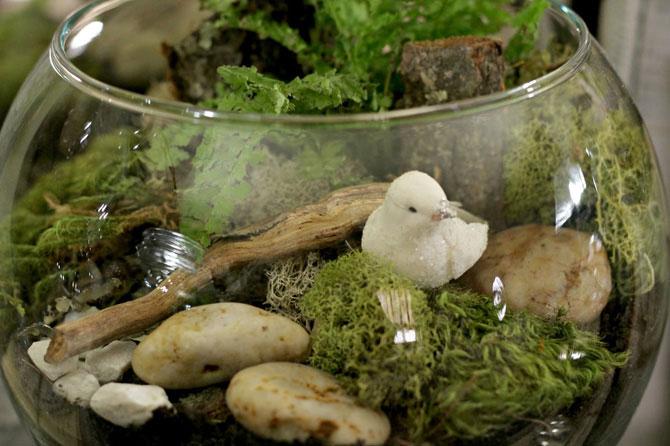 суккуленты и кактусы мини-садик 16