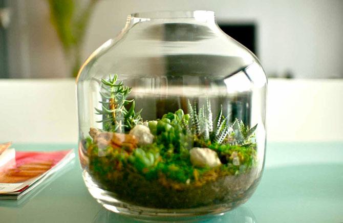 суккуленты и кактусы мини-садик 09