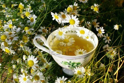 Preparation of chamomile tea