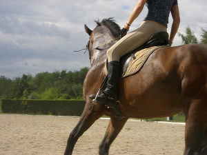 Horse back Riding benefits