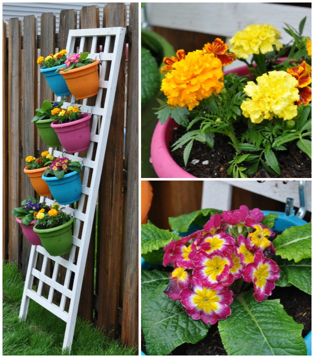 vertical flower garden with primroses