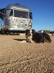 "I like to travel and take my work with me.  Loobey is the answer.  Loobey is my Airstream (that's Carma on ""guard"" duty).  Lots of great tech companies were formed in a garage.  Mine might be the first to launch from an Airstream."