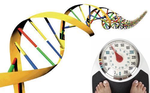 гены ожирение