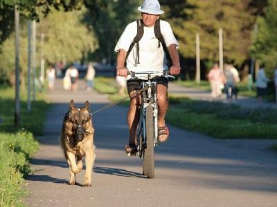 прогулка на велосипеде с собакой