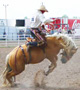 A bronc rider at Cheyenne Frontier Days