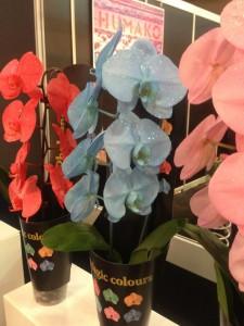 תמונות פרחים מעוצבים