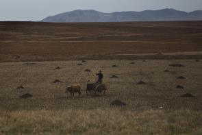 Pyongyang: A farmer works in a field south of Pyongyang, North Korea.