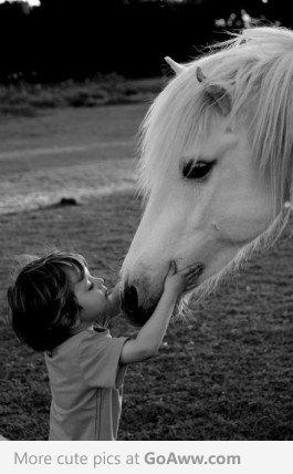 лошадь и ребенок