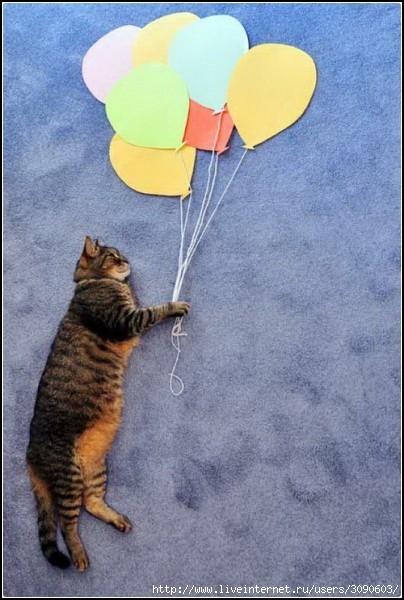 кошка летит на шарах