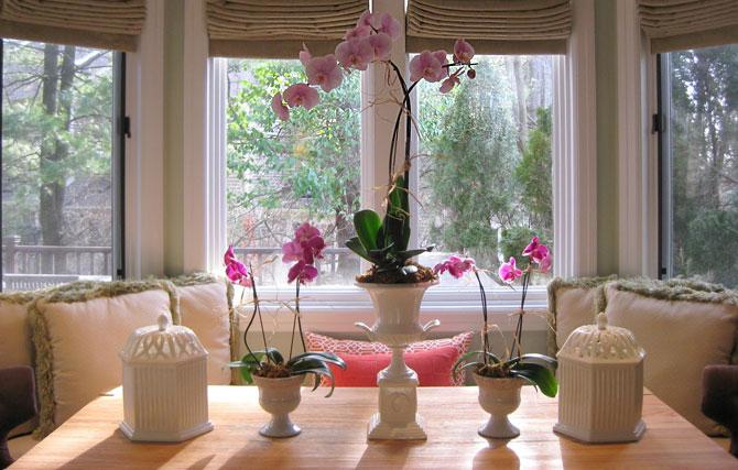 орхидея 75