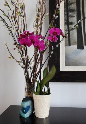 орхидея 62