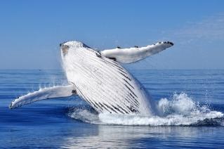 Scandinavia_whale watching