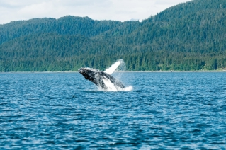 best whale watching in the world