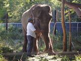 Dr. Jim Laurita at Hope Elephants on September 10, 2014, a day before his death.