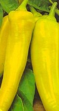 Growing Peppers With The Sweet Banana Pepper