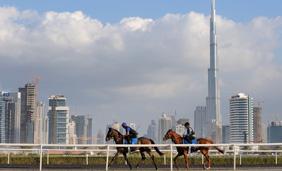 Burj Khalifa Al Quoz Stables, Dubai