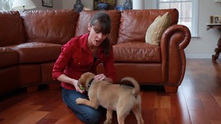 Come When Called 1:  Puppy Basics