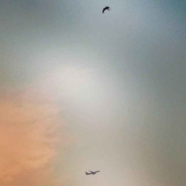 Captured .. Flight & a Bird! #Flight #Plane #Aeroplane #Bird #Birds #Sky #Skies #Zoom #Lumia920 #EveningSky