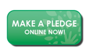 Pledge by placing donation!