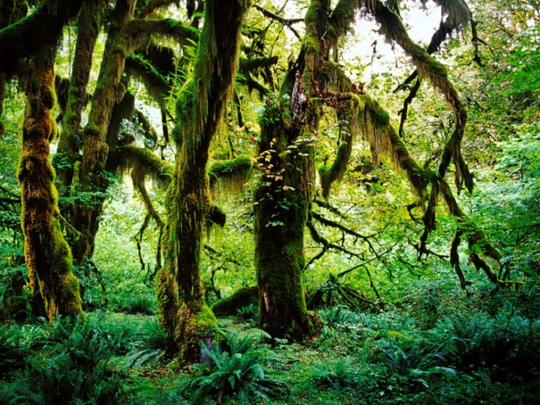 Photo of a mossy forest.