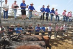 Cattle yardings mixed, prices up
