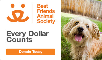 Best Friends Animal Society. Donate Today.