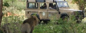 Wildlife_Conservati231771C