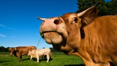 Actually, Raising Beef Is Good for the Planet