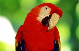 bird rehoming