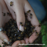 Handful of Bees