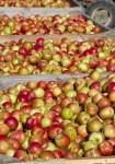 apple cider60