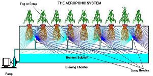 Aeroponic Method