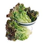 PMA - Lettuce Organically Grown 0033383904115  / UPC 033383904115