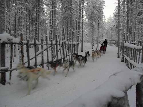 Visita a una granja de Huskies