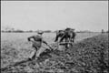 A Boy Ploughing at Dr. Barnardo's Industrial Farm / National Archives of Canada / PA-117285