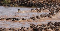 Serengeti-migration-Tanzania