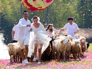 13 February 2015: Couples (L-R) Chaiyut Phuangphoeksuk and Prontathourn Pronnapatthun, and Nichapatr Koomsombut and Pirat Rungthongoran run from sheep during their wedding ceremony at a resort in Ratchaburi province. Three Thai couples took part in the wedding ceremony arranged by a resort themed around fun activities ahead of Valentine's Day