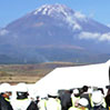 Residents in Gotemba, Shizuoka Prefecture, participate in a disaster drill on Oct. 19 held by the central government and three prefectures in the event of a volcanic eruption of Mount Fuji. (Yasuhiro Sugimoto)