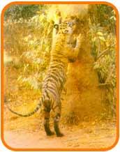 Corbett National Park, Tiger Reserve, Dudhwa National Park