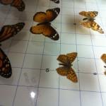 Museo de la Naturaleza y el Hombre Schmetterlin
