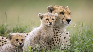 cheap safari holiday