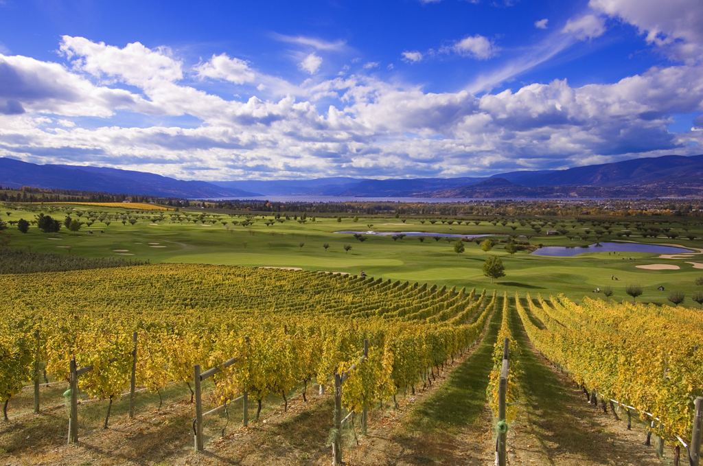 Harvest Golf Course Vineyards, Kelowna BC