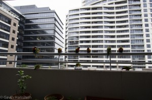 Our flock of Rainbow Lorikeets