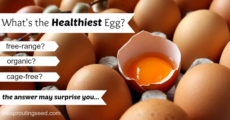 what's the healthiest egg? free-range? organic? cage-free? the answer may surprise you! thesproutingseed.com #healthiestegg