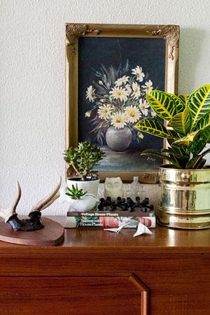 комнатные растения 09