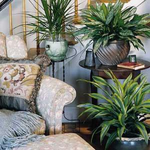 комнатные растения 106